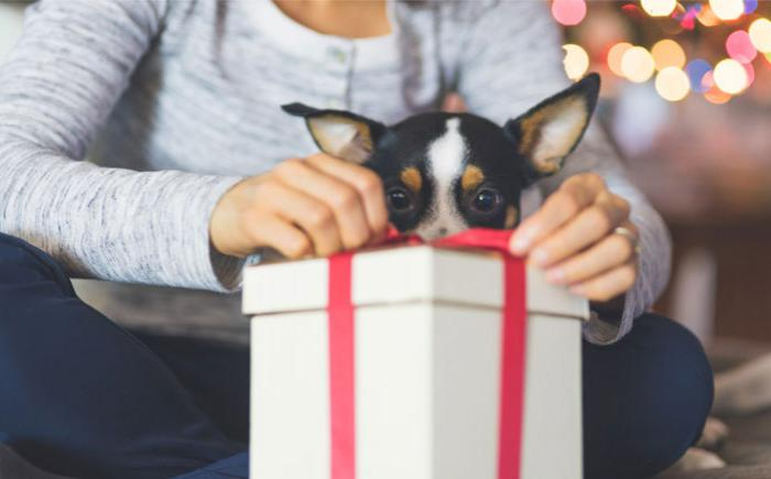Woman tying ribbon on gift with dog looking on