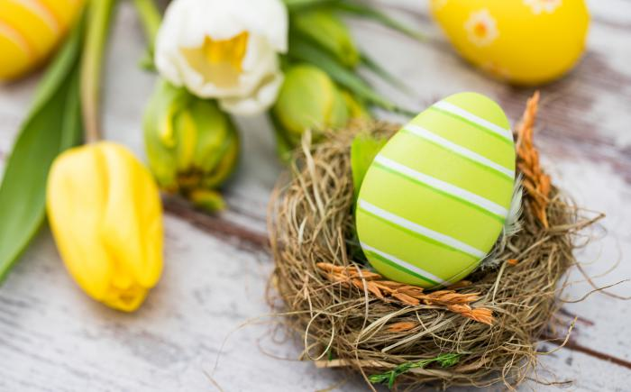 Photo of tulips and a decorated egg in a bird's nest