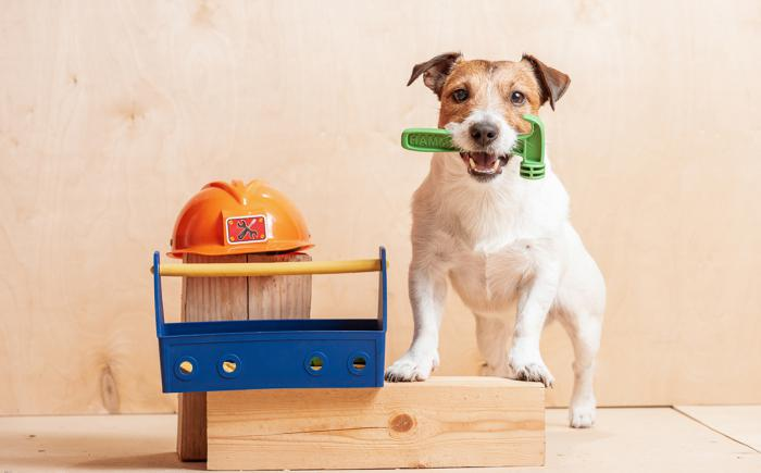Small dog with a plastic hammer in its mouth, next to a hard hat and toolbox