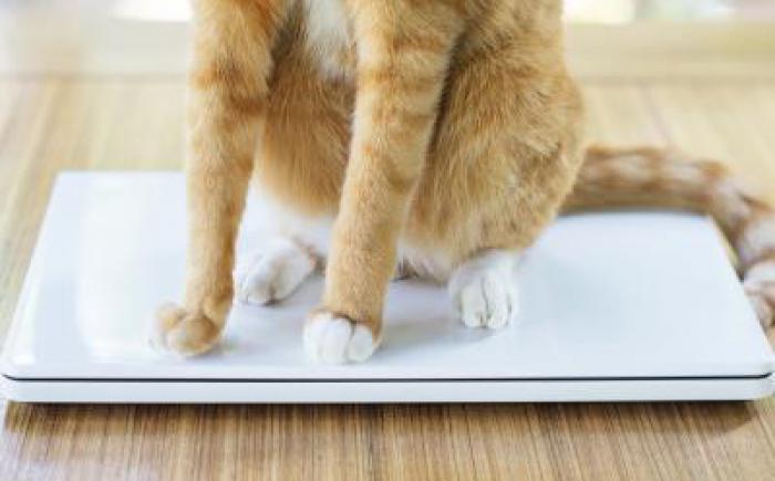Orange cat sitting on closed laptop