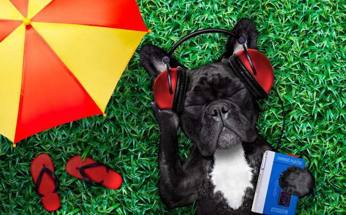 Dog in grass next to umbrella wearing headphones