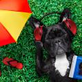 Dog in grass next to umbrella listening to music with headphones