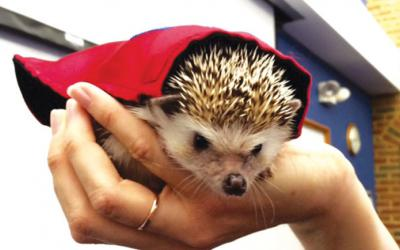 Woman's hand holding a hedgehog in a red cape