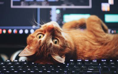 Orange cat lying on computer keyboard