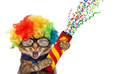 Cat wearing rainbow wig with confetti