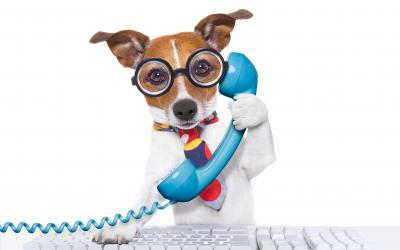 Dog in glasses and a tie answering the phone